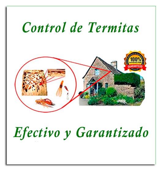 _---termites.jpg