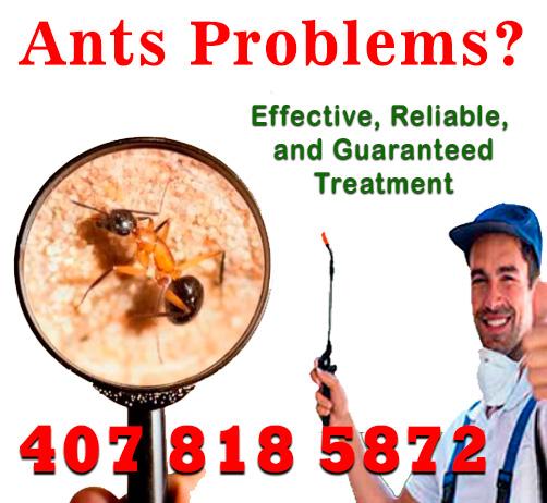 hormigas-INGLES-MARCELA.jpg