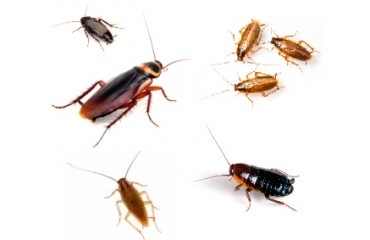 GUARANTEED COCKROACH CONTROL - ROACH EXTERMINATION